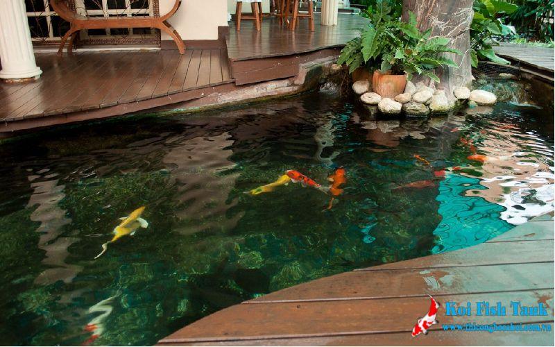 Công trình thi công hồ cá koi trong nhà tại Quận 7