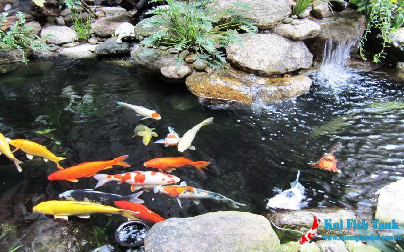 Công trình sân vườn cá koi tại Vũng Tàu