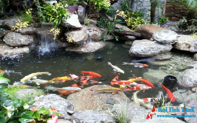 Công trình hồ cá tại Bình Phước