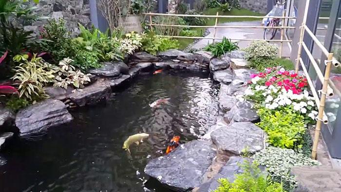 Cải Tạo Hồ Cá Koi | Tư Vấn Nâng Cấp Và Chăm Sóc