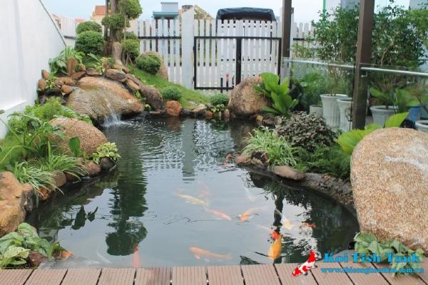 Công trình hồ cá Koi sân vườn quận 7