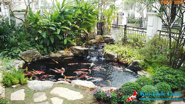 Thiết kế thi công hồ cá koi sân vườn đẹp