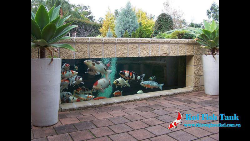 Bí quyết nuôi cá koi trong hồ kiếng và cách chăm sóc tốt nhất
