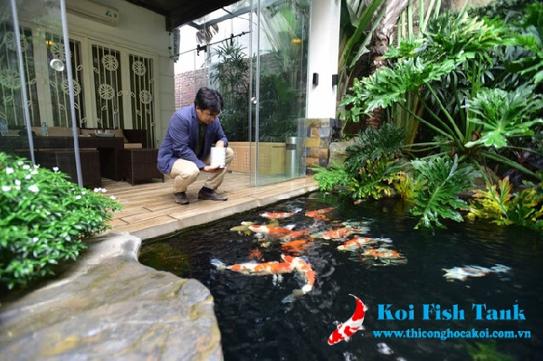 Cách chăm sóc cá koi mùa mưa đúng cách và phòng bệnh tốt nhất