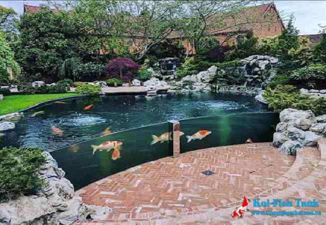 Thiết kế hồ cá koi tạo đẳng cấp cho ngôi nhà