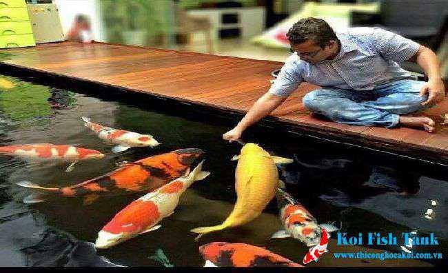 Cách nuôi cá koi đúng tiêu chuẩn