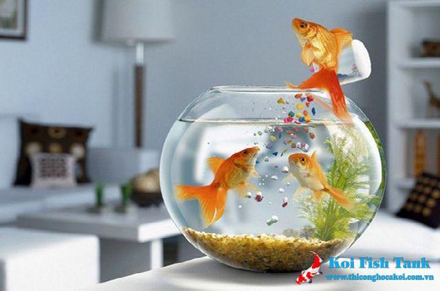 Hướng dẫn đặt bể cá để bàn trong phòng làm việc