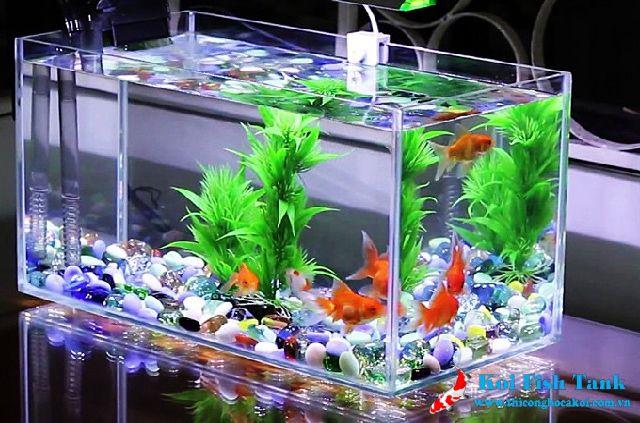 Cá vàng thích hợp để nuôi trong bể cá để bàn
