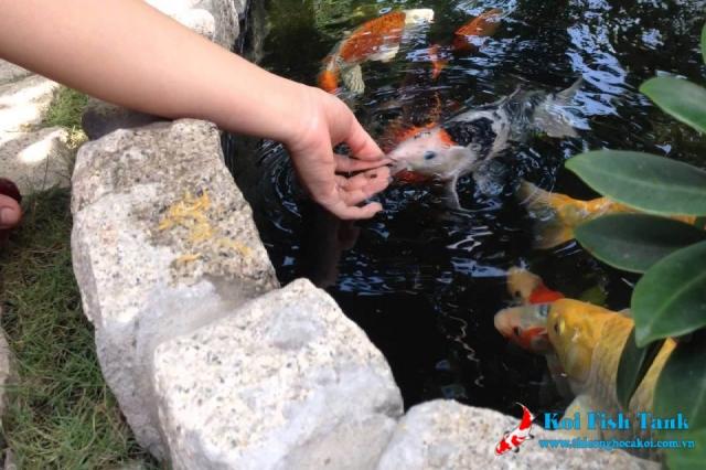 Mẹo nhỏ khi cho cá ăn