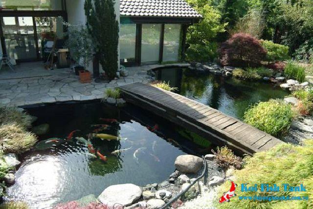 Làm thế nào để vệ sinh hồ cá koi hiệu quả?