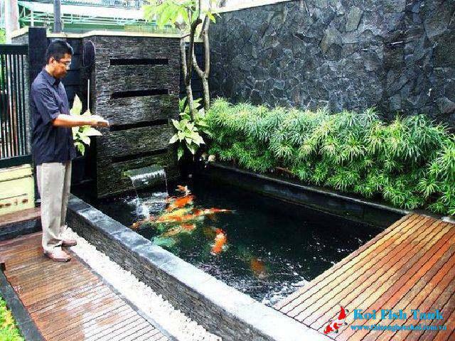 Những điều nên biết khi xây dựng bể cá koi mini tại nhà