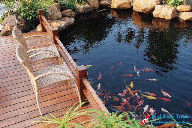 Cách xử lý nước nuôi cá koi giúp cá không bị chết