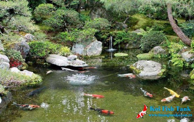 Hồ cá koi đẹp trong sân vườn