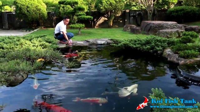 Các khoản chi phí để bạn sở hữu một hồ cá koi đẹp