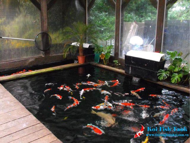 Ý tưởng thiết kế hồ cá koi trong nhà giúp tăng giá trị nhà phố