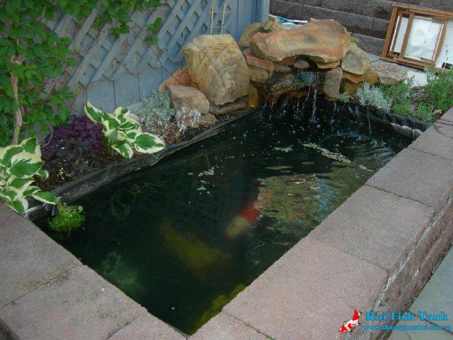 Thiết kế hồ cá Koi mini trong nhà