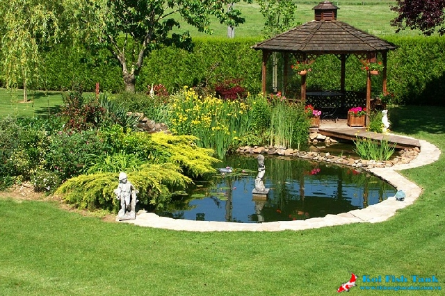 Gợi ý thiết kế hồ nước trong sân vườn tuyệt đẹp